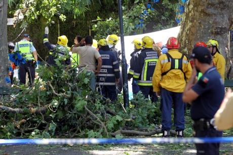 Наострові Мадейра під час фестивалю впало дерево: 11 загиблих