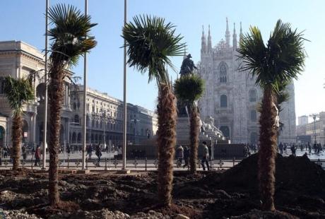 Вцентре Милана протестующие подожгли пальмы наплощади Дуомо