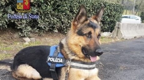 У Римі поліція взяла на службу безпритульного собаку | Європейська ...